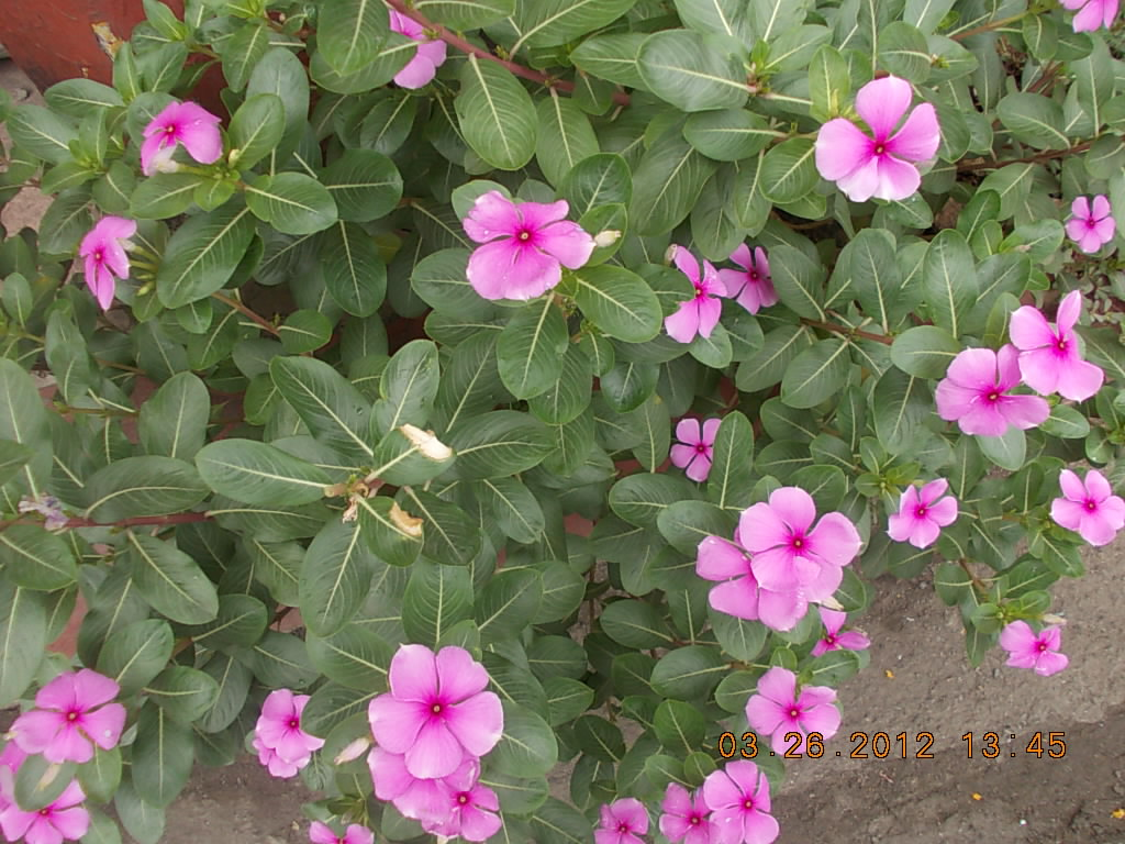 Cheap Cures Affordable Health Care Healing Shrubs And