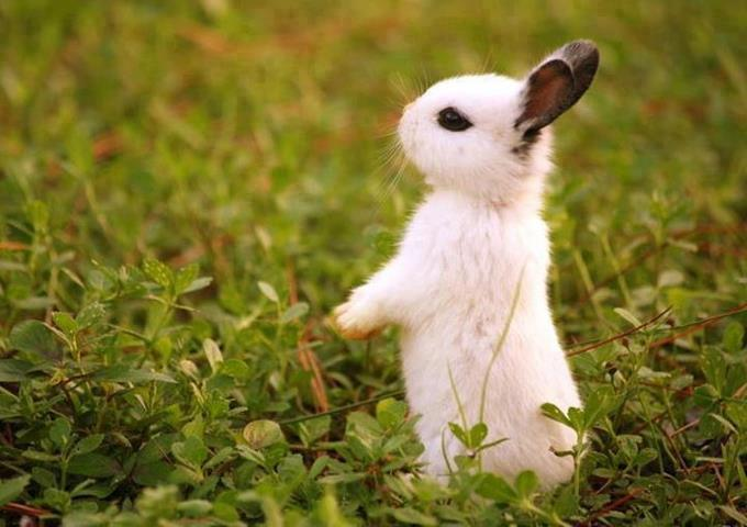 Little rabbit baby waiting for mommy