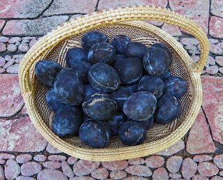 Basket of Fresh Prune Plums