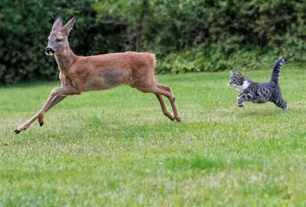 Funny animals of the week, best animal photos, funny photo, animal picture