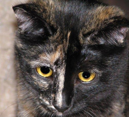 Older Cats Get Viscious