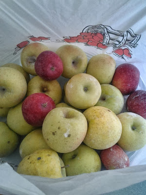 Apples picked at Crooked Run Orchard in Puracellville