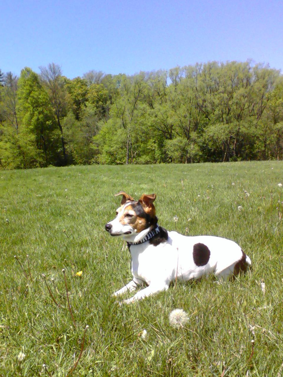 Dog Training Milton Ontario