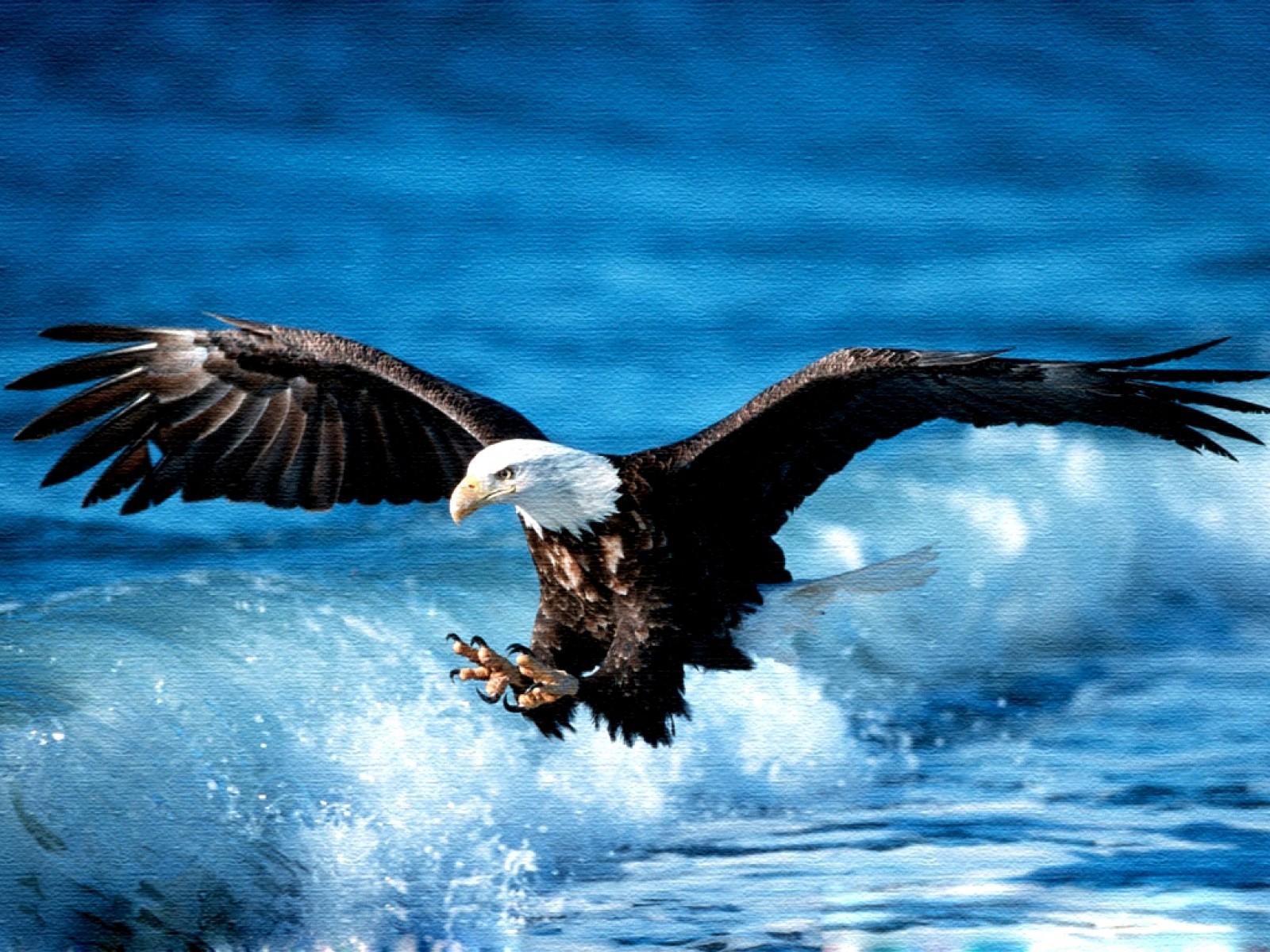 Eagle bird images - photo#26