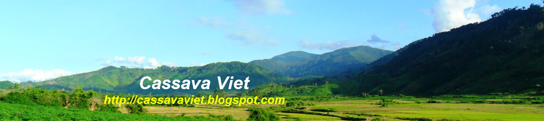 Cassava in Vietnam