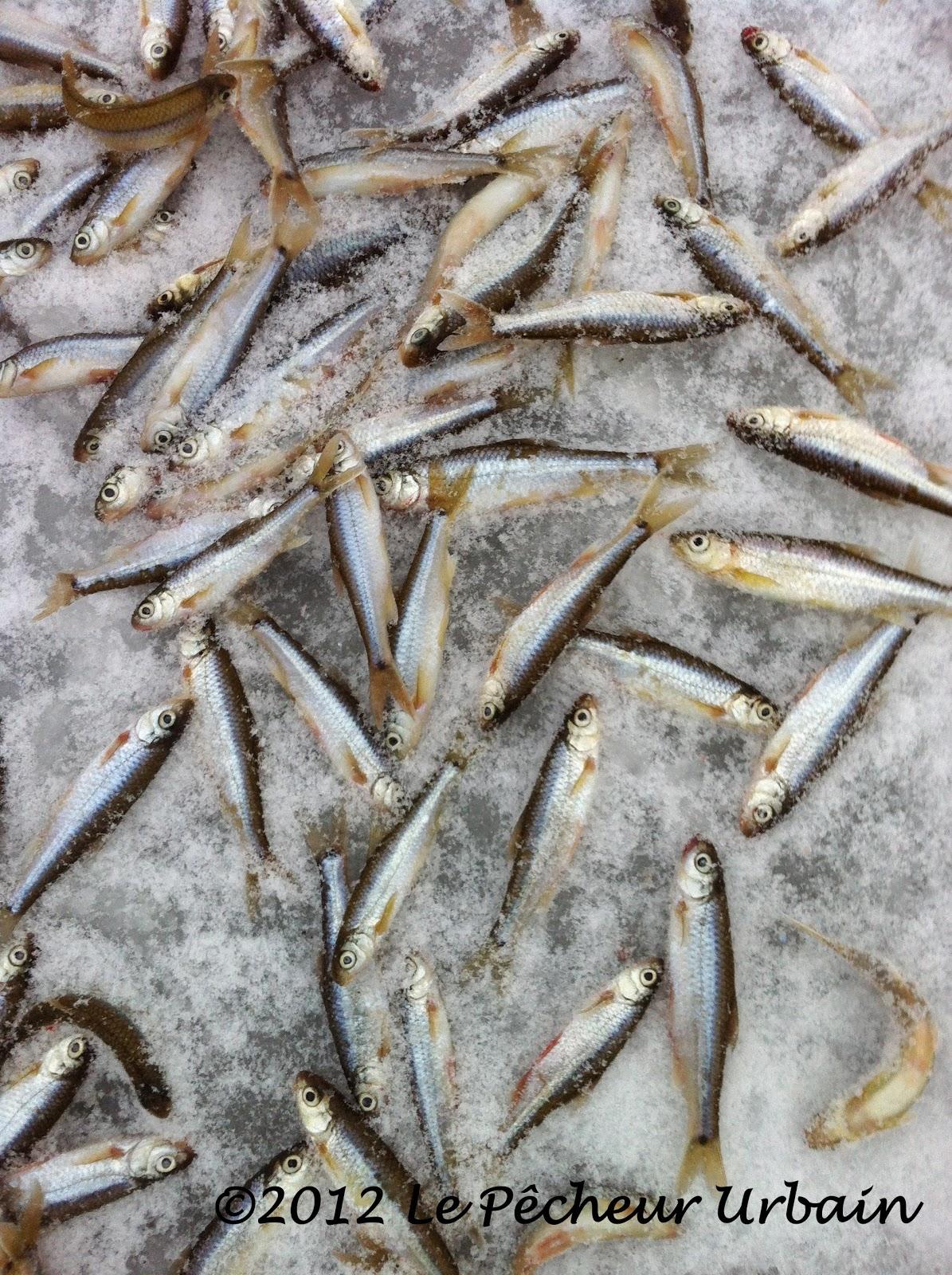 Tout pour la pêche est bon marché à moskve
