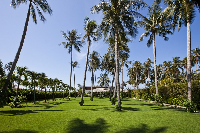 Huge backyard with palm trees