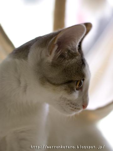 子猫の美しい写真風