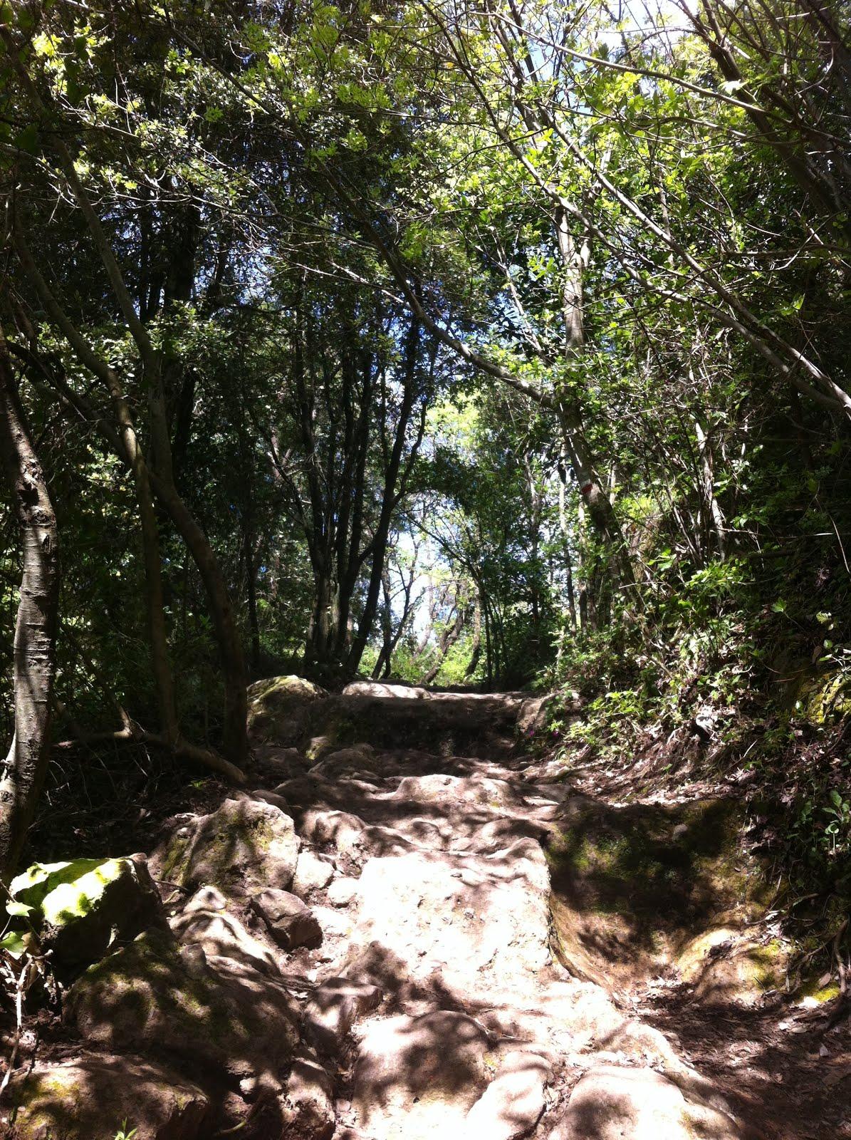 Il bosco sacro
