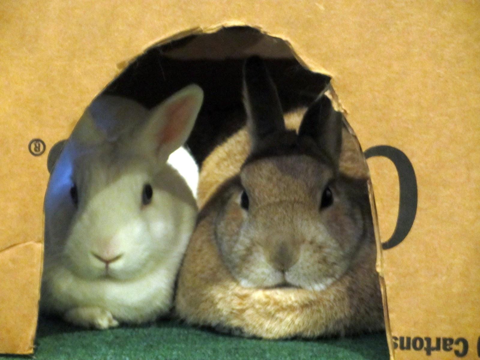 First spotted this cute couple in their favorite Cheerios box. 5d17e7da4