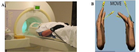 写真:fMRIとバーチャルグローブ