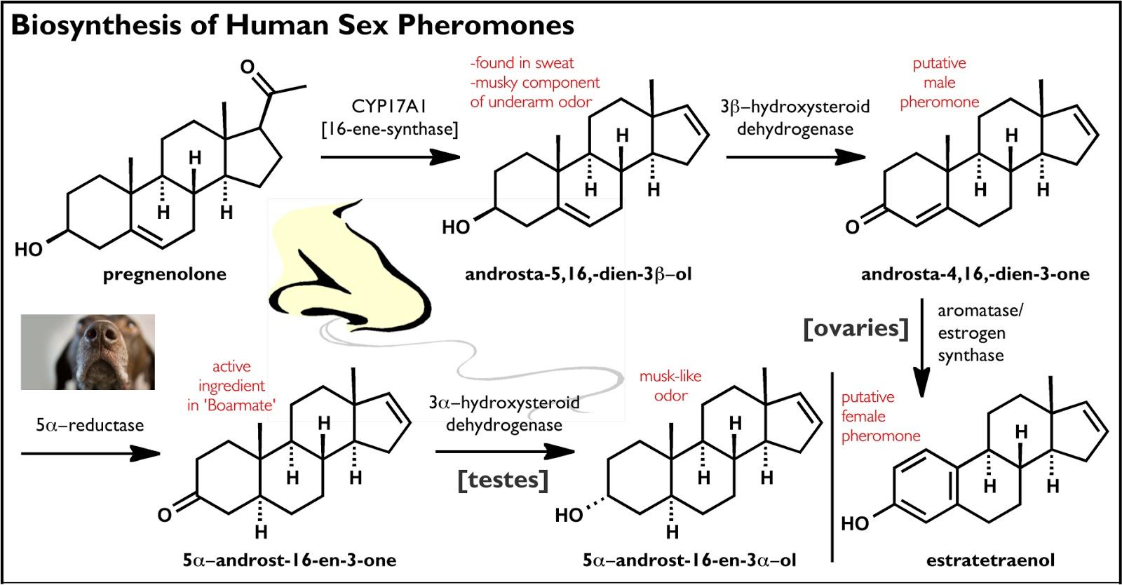 biogenesis of steroids in higher plants