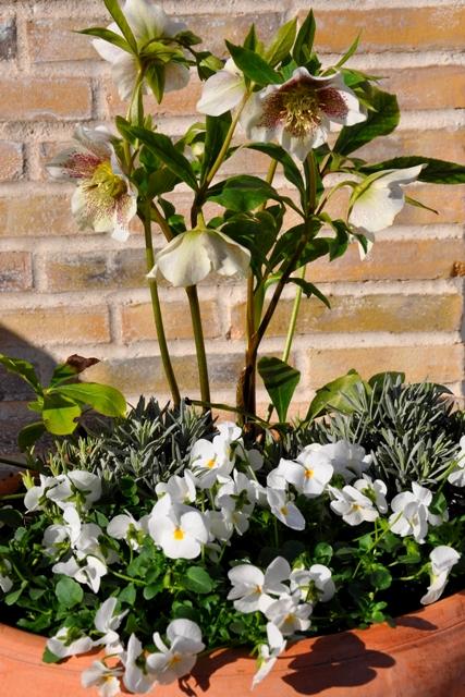 Dyrk din have: Fyld dine krukker - med succes