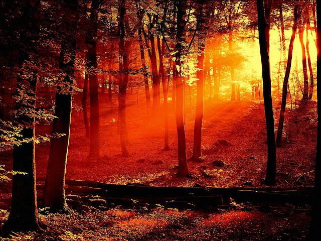 Imagen linda por do sol na floresta