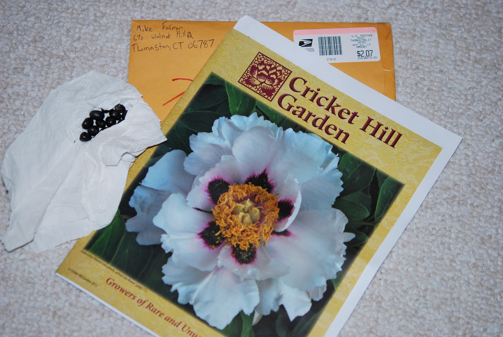 P. Rockii Seeds And Catalog From Cricket Hill Gardens