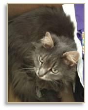 Cat in a box, Mystique