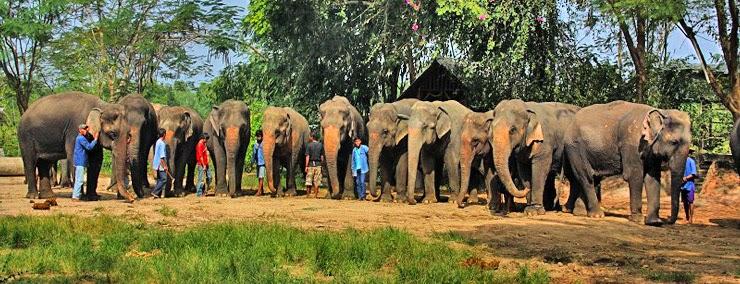 قرية بتايا للأفيال