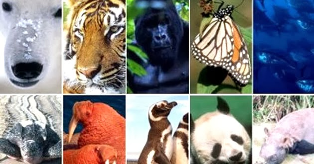 WWF España Las especies más amenazadas