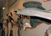 MUSEO UNIVERSITARIO DE HISTORIA NATURAL