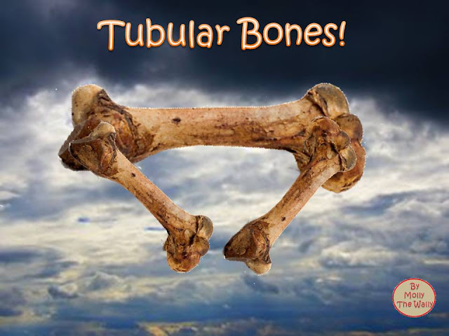 Tubular Bells album cover by Molly The Wally!
