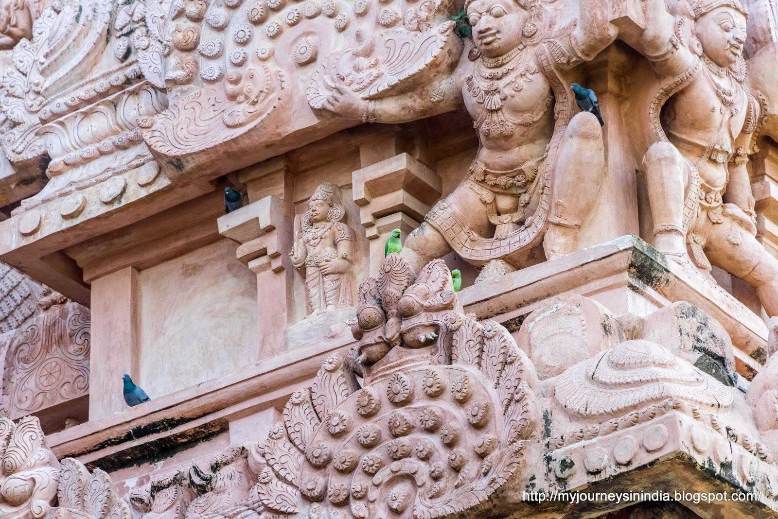 Gangaikondacholapuram Parrots and Pigeons