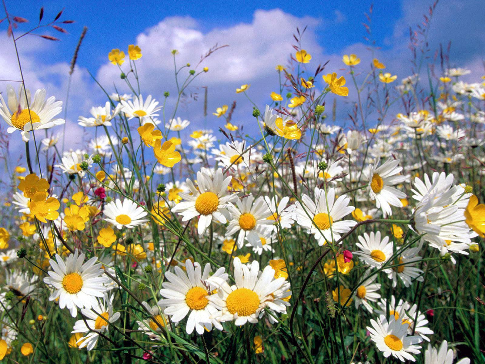 Доставка цветов в МурманскеЗаказ цветовПан Тюльпан
