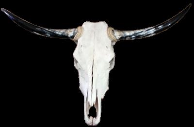 Tête de taureau longhorn[Déco]
