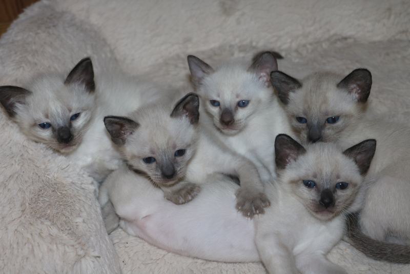 Bella 's kittens