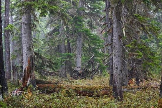Фотограф Максим Яковчук: 7 жовтня 2014 року в Національному ботанічному саду ім. Н. Н. Гришка НАН України відкриється фотовиставка «Лісові історії», присвячена філософії відповідального ставлення до навколишнього середовища.