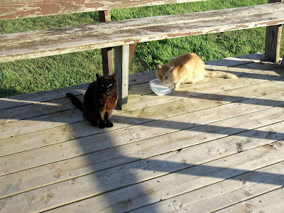 black and orange cats on porch