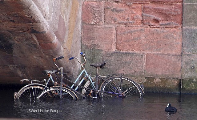 bicycle and a coot