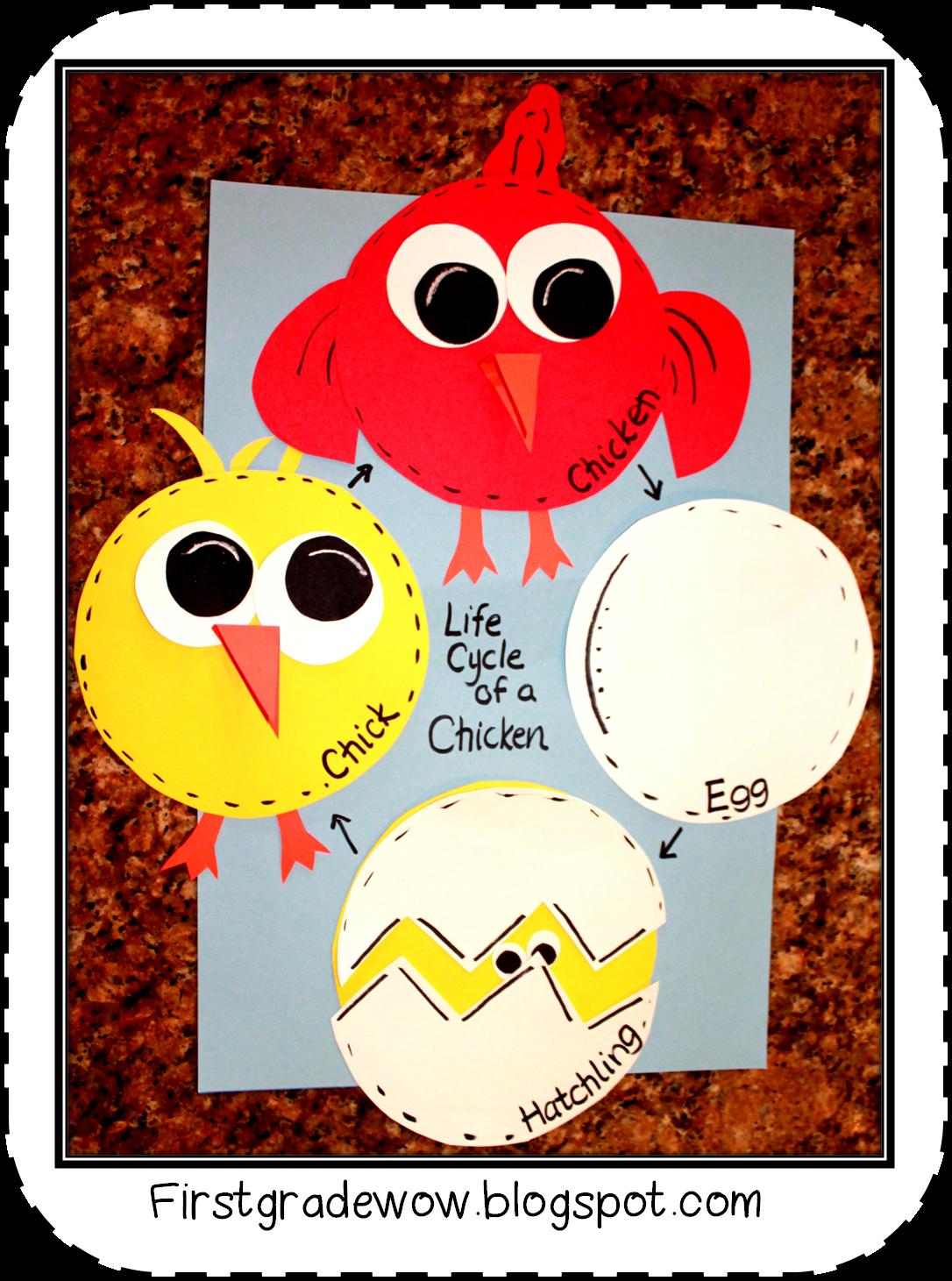 Uncategorized Chicken Life Cycle Worksheet first grade wow animal feet and chicken life cycle