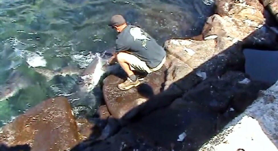 Guy has close call while hand feeding shark at Norfolk Island Australia