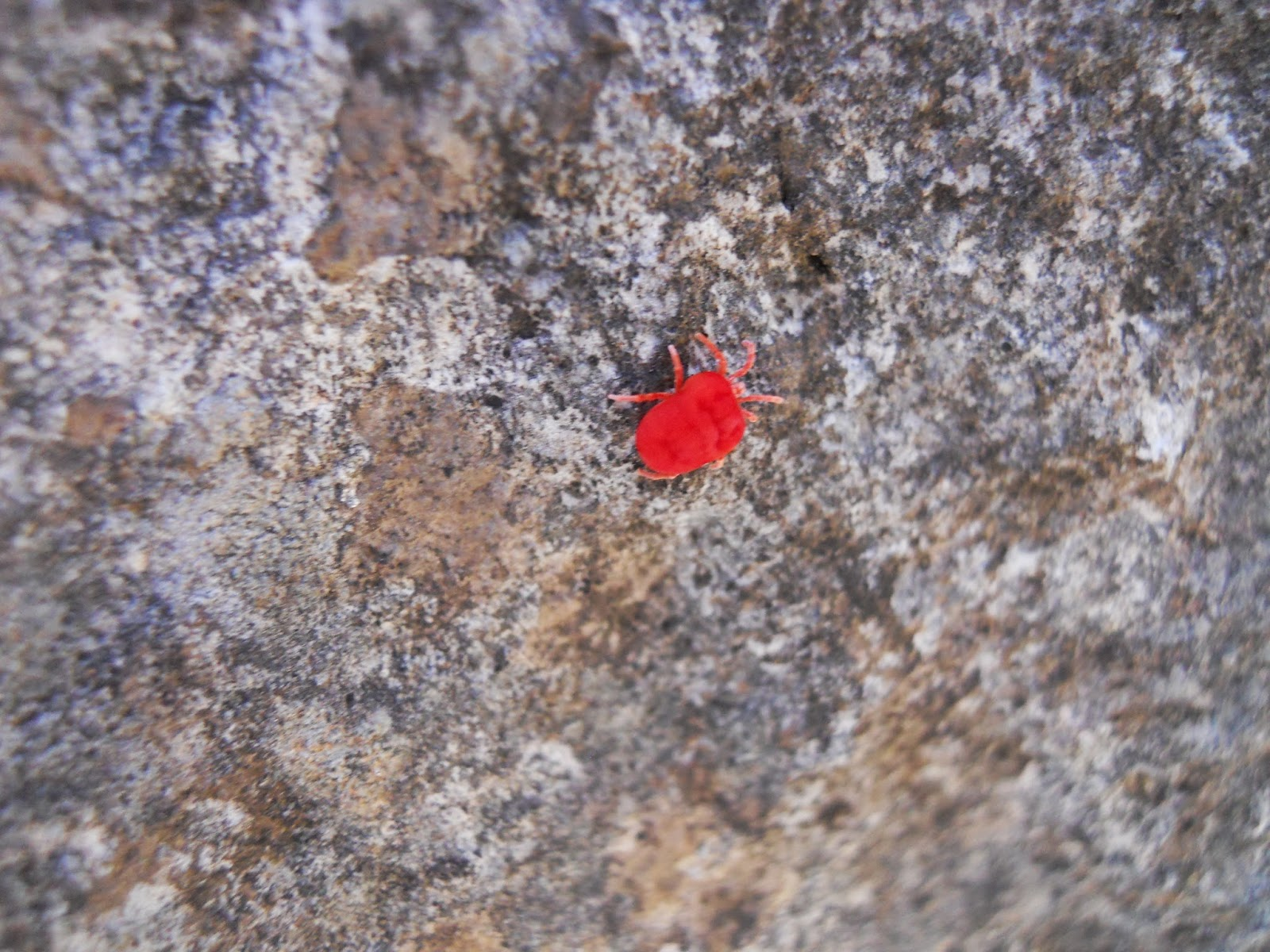 red tiny bugs on rocks rodent exclusion services ultrasonic pest. Fresh Tiny Red Flies In Kitchen   Taste