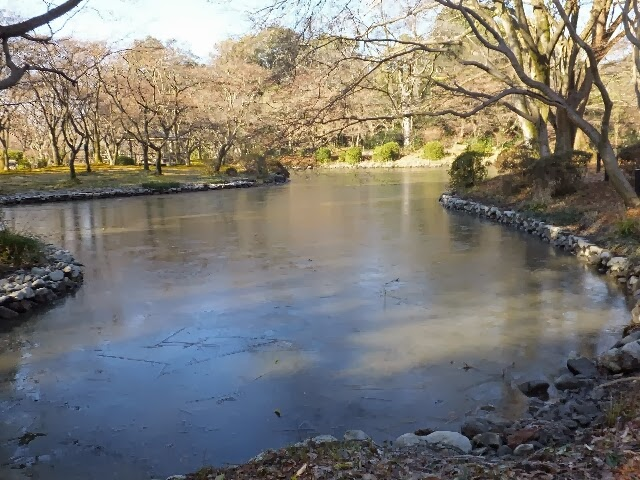 池には氷が張って凍てつく・・・。