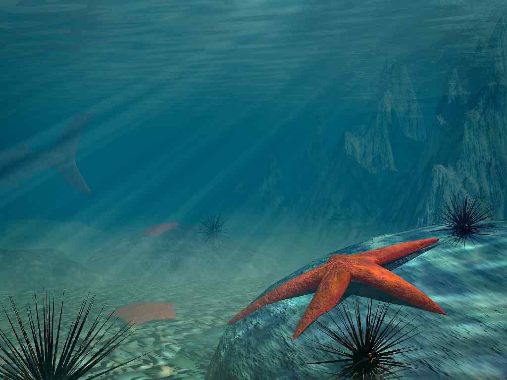 Avenger blog underwater pictures - Fotos fondo del mar ...