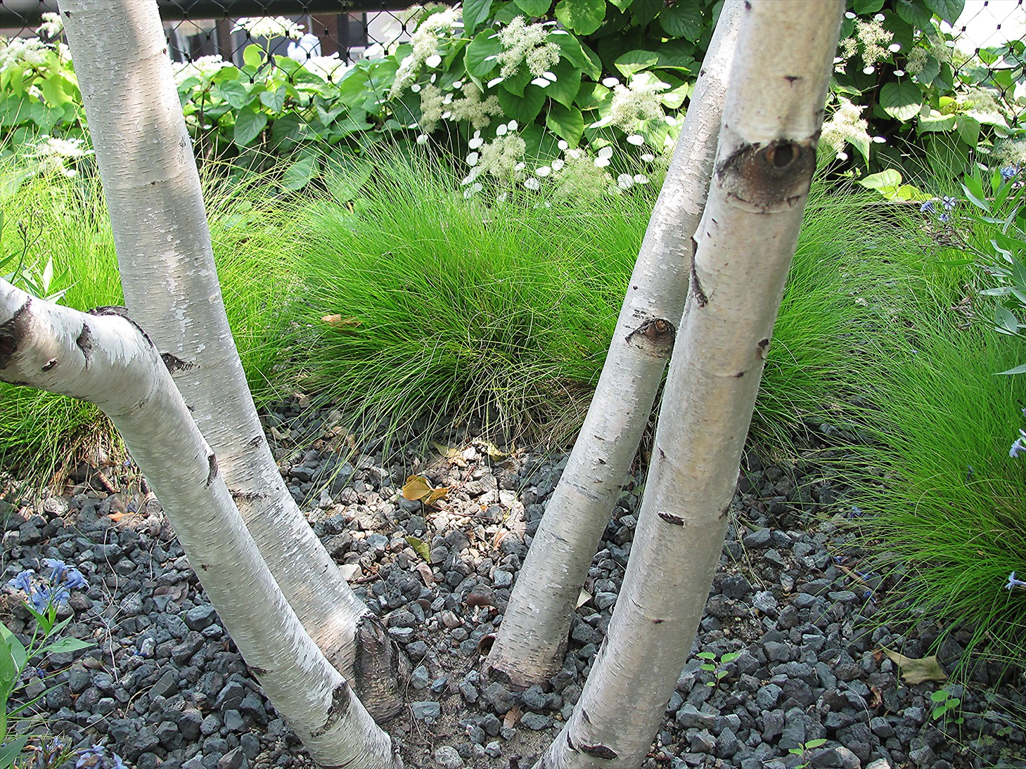 View from Federal Twist: Garden Diary: Trees for my small garden