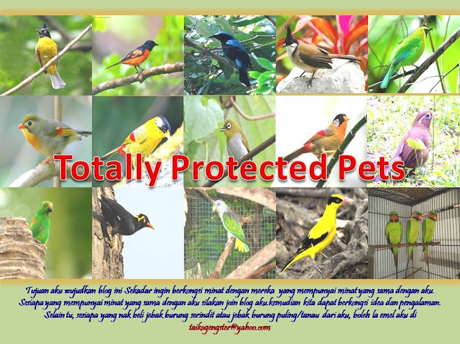 TOTALLY PROTECTED PETS