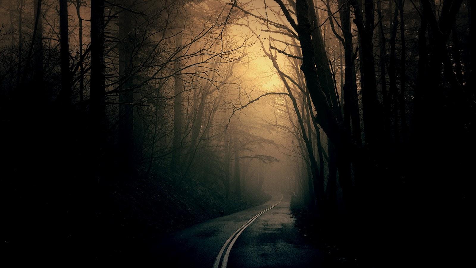 iwallpapers dark forest road hd wallpaper