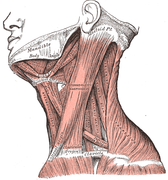 Thoracic Outlet Syndrome and Yoga | Yoga Instruction