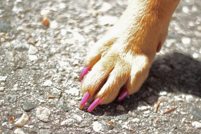 Pet Head 'Mommie & Me' Dog Nail Polish