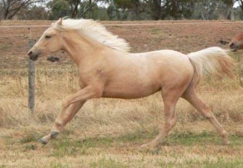 living stingy free ponies