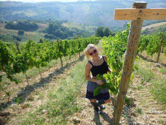 vineyard housesit italy