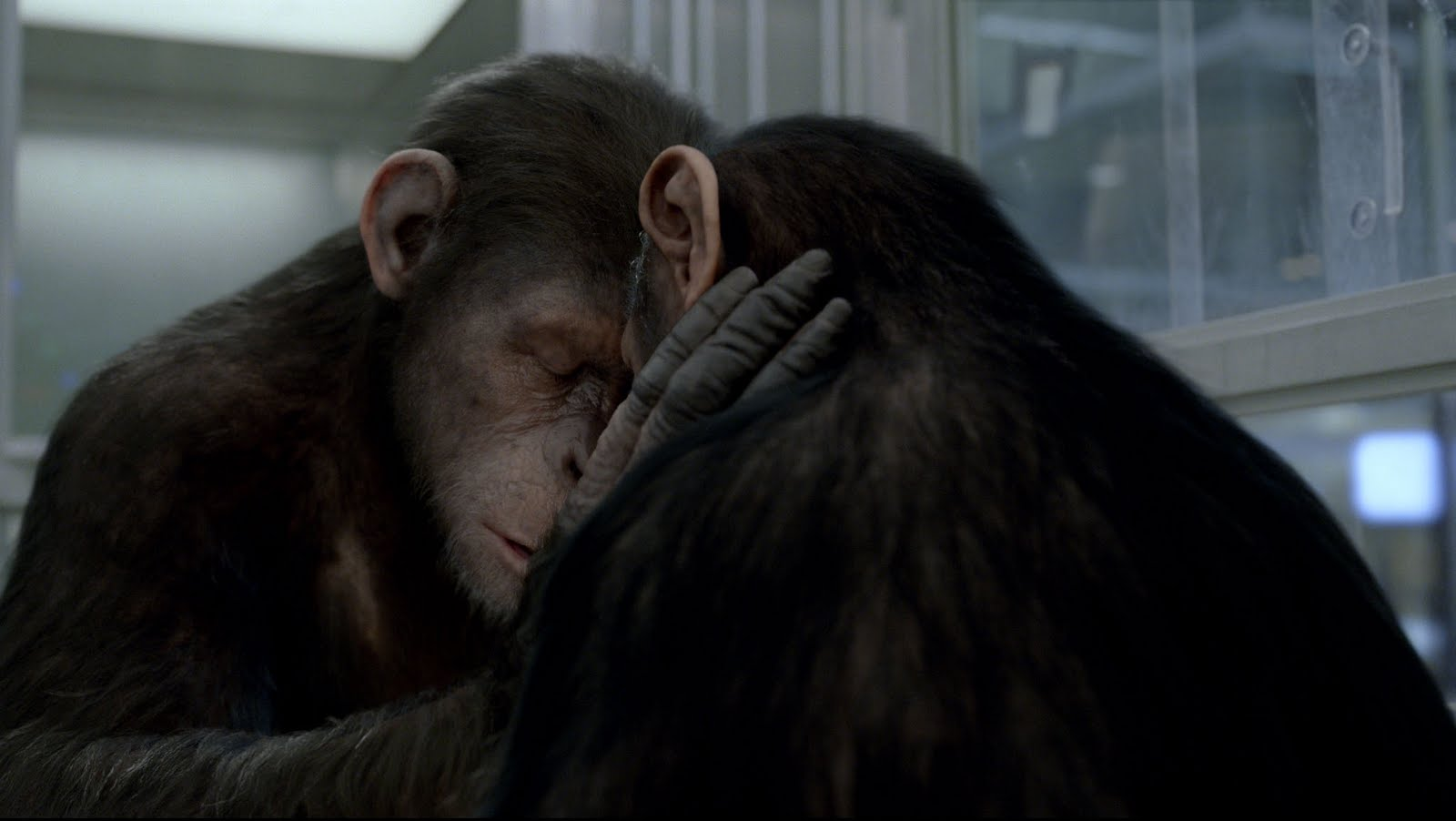 The Lazy Teenager In France: Rise Of The Planet Of The Apes