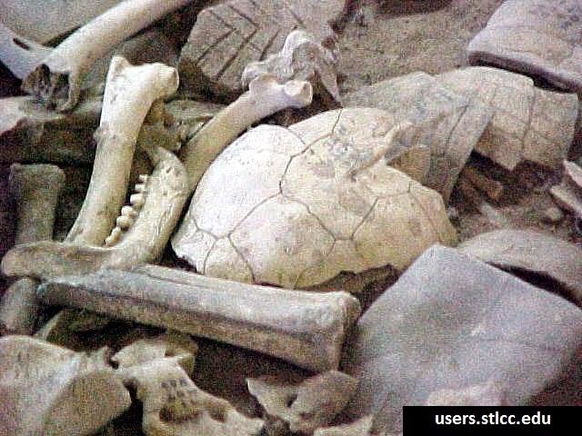 Tulang haiwan