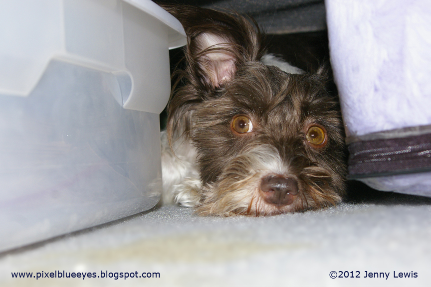 Dog In Pain Hiding Under Bed