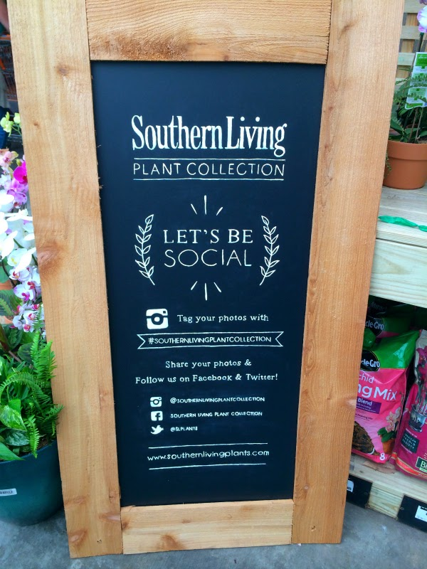 southern living plant collection social media chalkboard