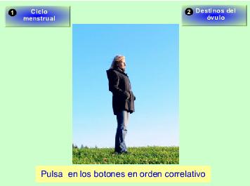 http://recursostic.educacion.es/secundaria/edad/3esobiologia/3quincena10/imagenes/ciclo_menstrual.swf
