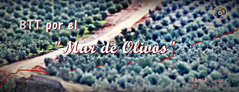 Enduro BTT en el mar de olivos