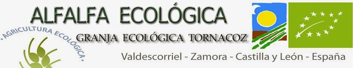ALFALFA ECOLOGICA